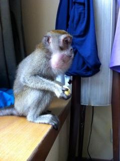 Chunkey Monkey macht sich in unserem Zimmer breit...